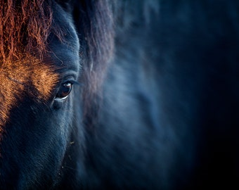 Horse print photography - black horse face - horse eye - close up, close-up, closeup, horse photograph wall art room decor by Wildnis