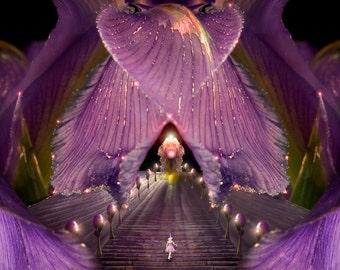Flower Fairy Photo - Iris - Print for nursery or child's room decoration