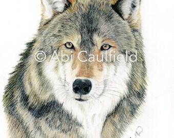 The Wolf Fine Art Print - Wildlife Illustration