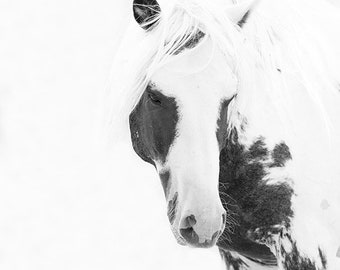 Thor Turns - Fine Art Wild Horse Photograph - Wild Horse - Black and White - Thor - Fine Art Print