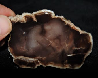 290 Gr Petrified Wood Agate Slab Slice Natural Rough / swp-5
