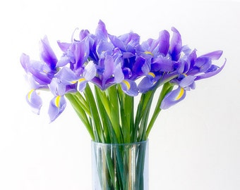 Bue Iris Photograph, Pastel Decor,  Floral Art Print, Flower Wall Decor, Still Life Photography, Purple Iris Art
