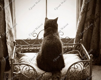 Sepia Tone Kitty Cat Waiting Patiently in the Window Fine Art Photography Photo Print