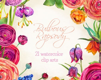 Buttercup clipart flowers, bulbous flowers clipart, hand-painted clipart, watercolor clip art, spring clipart, floral clipart, lily clipart