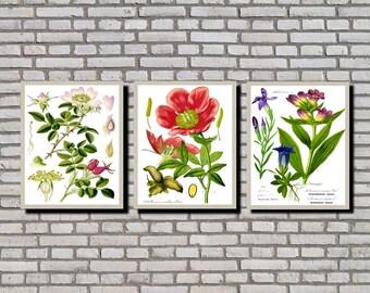 Botanical Prints, Set of 3 Vintage Botanical Illustrations, Vintage Plant Illustrations, Kitchen Wall Art Posters, Botanical Decor 0531