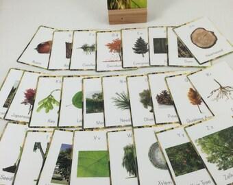 Tree alphabet cards, tree vocabulary cards, nature wall decor