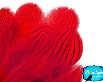 Pheasant Feathers, 1 DOZEN - RED Silver pheasant Plumage feathers: 426