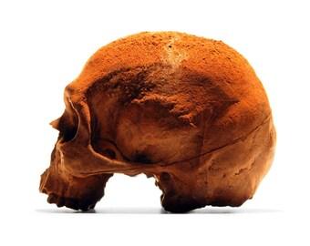 100 % Schokolade Schädel, anatomisch korrekte Schokolade Schädel