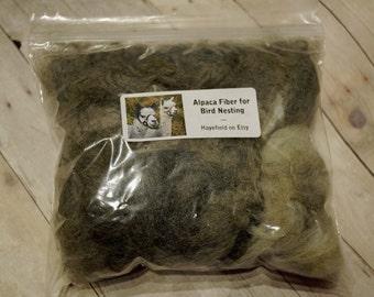 Alpaca Fiber for Bird Nesting