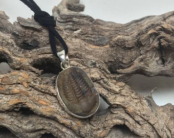 Genuine Fossil Trilobite and Sterling Silver Pendant: The 'Hoffi' (1-4)