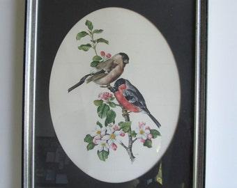 Framed Vintage Bird Print--Vintage Artwork, Bird and Botanical Art