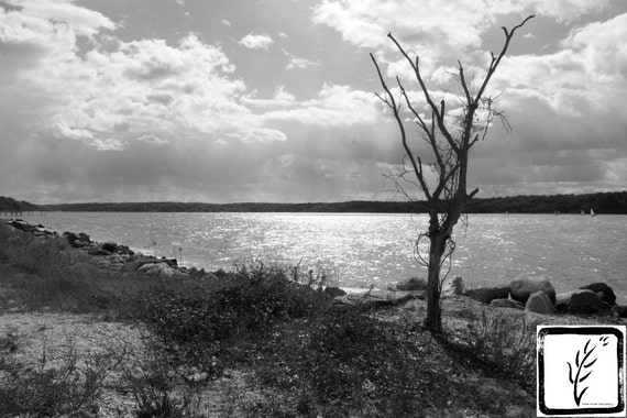 """Tree at Lloyd Neck,"" Lloyd Harbor, Long Island, New York, 2015"