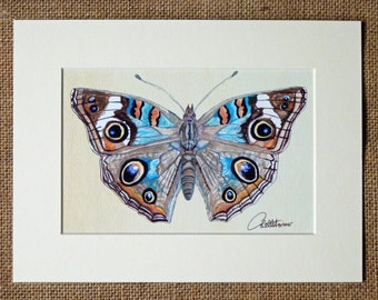 Butterfly Print, Butterfly picture, Buckeye Butterfly - Unframed Butterfly Print . Mount included. Comes attached to mount for easy framing
