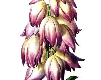 Adam's Needle Flower - 1970's Wildflowers Print - Botanical Print - Vintage Color Illustration - Vintage Book Page - 10 x 8 - 1973