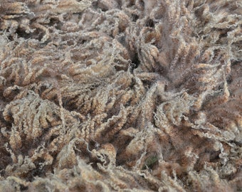 Raw Shetland Sheep Whole Fleece 1kg Approx