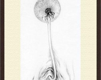 Dandelion Funny illustration Surreal Fantasy Art ORIGINAL PENCIL DRAWING Hand drawn black and white Fancy botanical illustration Framed Art