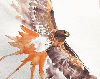 Red Tailed Hawk Watercolor Print