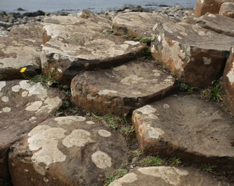 Ireland photography, Giant's causeway in Northern Ireland perfect for any decor