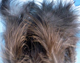 Volupte dark pheasant feathers