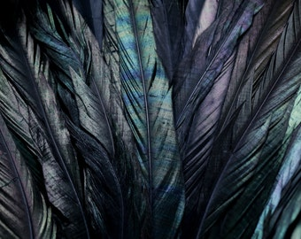 "14"" - 16"" Black dyed strung rooster tail  feathers"