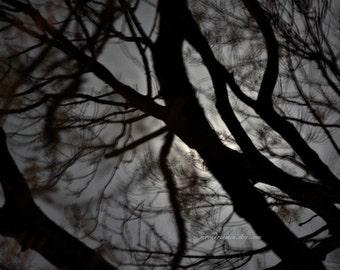 Spooky tree & shadows, Dreamscape no1 Abstract Moonlight, monochrome Night Sky, abstract photography, Black grey, silver moonscape, moon art
