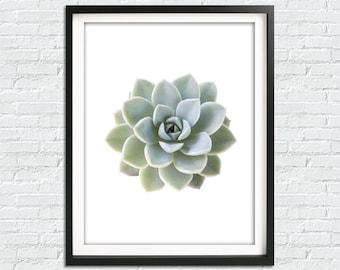Succulent Print, Cactus print, Botanical Print, Succulent Art, Succulent Wall Art, Printable Art, Succulent Art Print, Cactus Printable