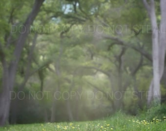 Magical woods | digital background / digital backdrop | trees and wild flowers ...