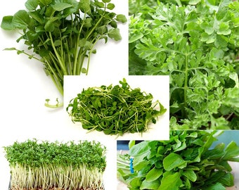 300+ ORGANICALLY GROWN Cress Salad Blend Seeds Mix 5 Varieties Heirloom NON-Gmo