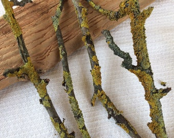 Natural wood branches, lichen moss, 7 old dry apple tree twigs for crafting, woodland wedding decor, jewelry display, terrarium, fairy house
