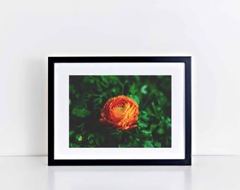 "Fine Art Wall Decor Floral Print: Tea Rose (12"" x 10"")"