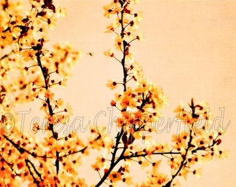 Blossom Photo Print, Spring Flowers, Flowering Tree, Pretty Orange Blossoms, Soft Floral Garden Print, Bees, Peach Apricot Tangerine Tones