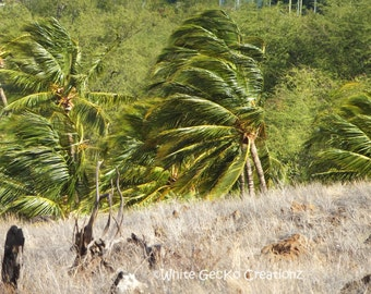 Palm Trees, Hawaii, Beach, Big Island, Palms make the best sound in the wind.