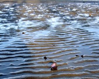 Seashell on the Beach, Dash Point Park, WA