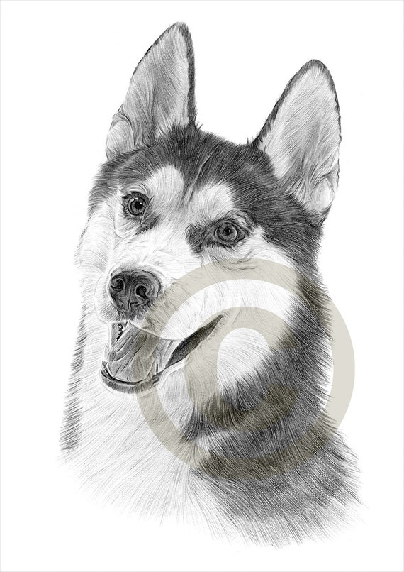 Crayon De Siberian Husky Chien Dessin Imprimer Oeuvre Format