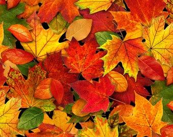 Fall foliage, Autumn Leaves - Landscape Medley, Elizabeth's Studio - 478 Multi - Priced by the half yard