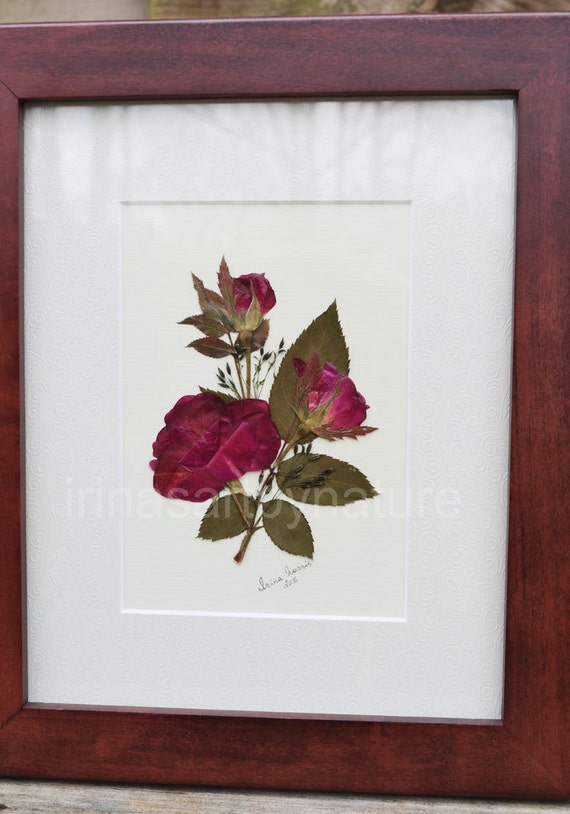 Real Roses Original Pressed Flower Art Floral Design Oshibana