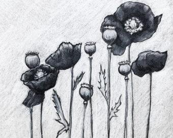 Black Poppies - Print of original drawing by Ashleyspirals