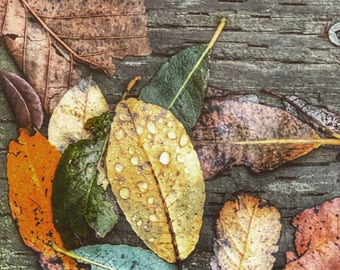 Rainy Day Leaves archival nature print, colorful wall art for home or office