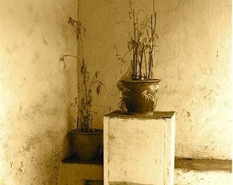 """Sepia doorway dead plants photograph biege cream abstract photo dead plants in doorway  Asia """"just dead"""""""