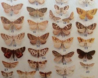 Vintage 1920s Insect Bookplate MOTH Print Illustration MOTHS Entomology Home Decor