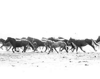 Running horses photography. Mare and foal Mongolia wild horses black and white print. Horse lover wall art. Equestrian home decor. Kids room