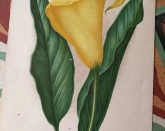 French Antique Botanical Print, Antique Floral Illustration, Victorian Botanical Ephemera, Antique Plant Illustration, Antique Colour Plate