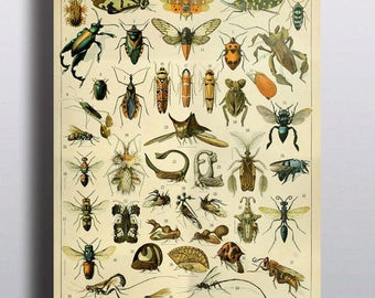 Large Wall Art Antique Insects Science Chart Natural Science Bugs Wall Decor Wall Art Scientific Beetle History Illustration