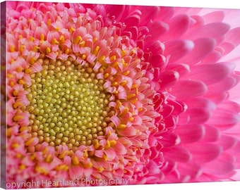 Pink Daisy Canvas, Pink and Yellow, Photo Canvas, Macro Photography, Nature Photography, Flower Canvas, Macro Art, Spring, Summer, Wall Art