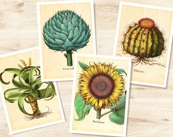 Botanical Card Set | 4 Botanical Prints | Vintage Botanical | Cactus | Artichoke | Aloe | Sunflower | A6 Besler Botanic Card | Greeting Card