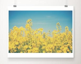 rapeseed photograph yellow flower photograph rapeseed print nature photography botanical print wild flowers print summer photograph