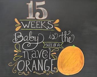 15 Weeks Pregnancy Chalkboard Sign - Maternity Photo Prop  - Weekly Baby Bumpdate - DIY Chalkboard Printable - Instant Download - 10x8 JPG