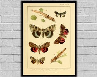 Vintage Moths and Caterpillars Print/Canvas - Antique Moth & Caterpillars Print - Lepidoptera Decor - Butterfly and Moth Wall Art - 254