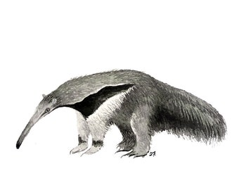 Anteater blank greeting card reproduction of my original watercolor and ink illustration drawing of south america giant wildlife animal