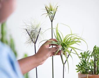 Set of 4 | Steel Brown Air Plant Stand - tillandsia, plant stand, terrarium, modern, succulent,  zen, office gift, desk accessory